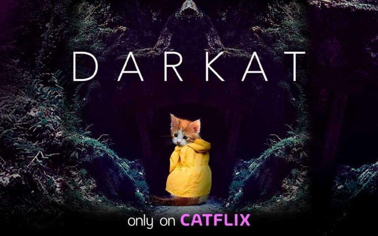 Catflix: El Netflix de los gatos