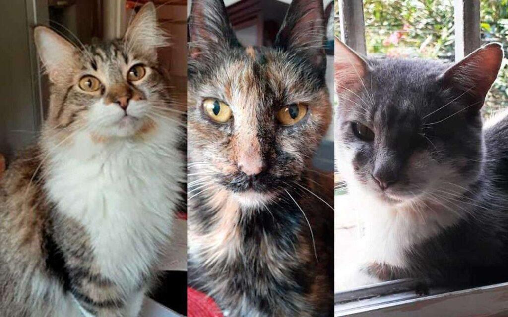 Gatos de nombre Tapo Mochis y Parche, estas son sus historias