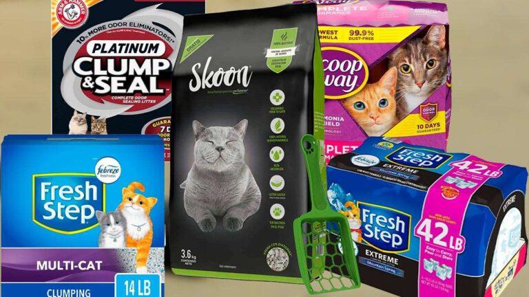 Arena para gatos: Consigue la mejor para ti