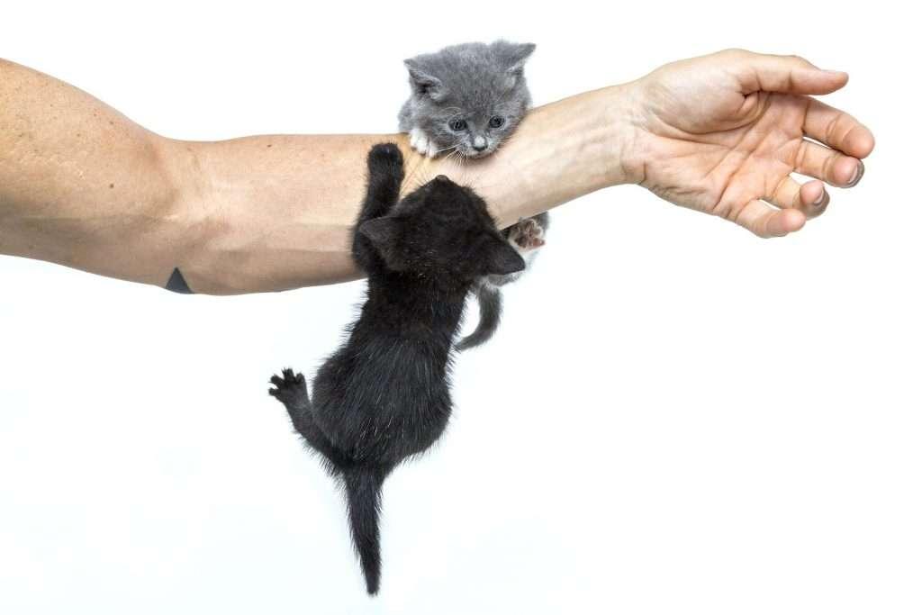 Adopción responsable, hombre jugando con gatitos