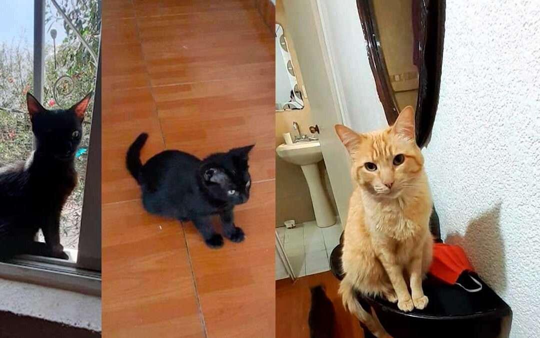 Gatos, Historia de Chelita y Salem