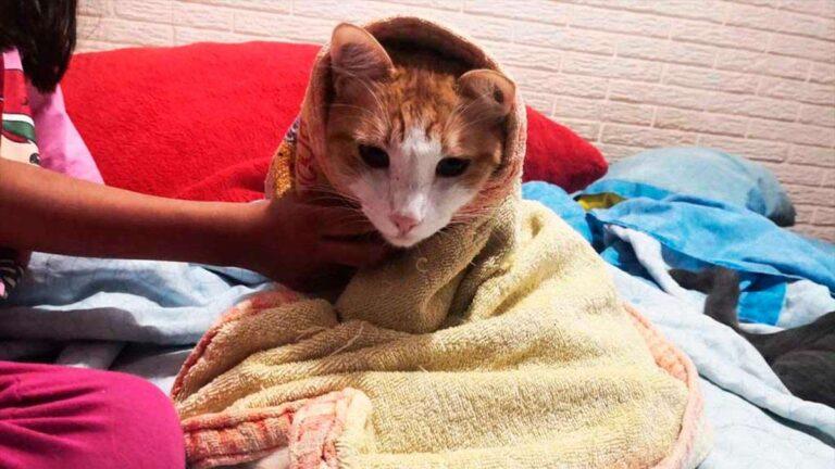 ¿Cómo bañar a un gato?