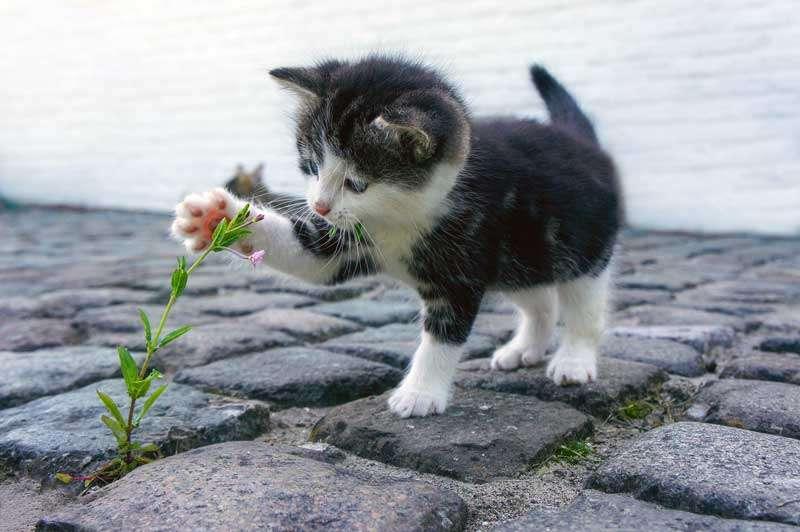 Gatito bebé jugando con una flor