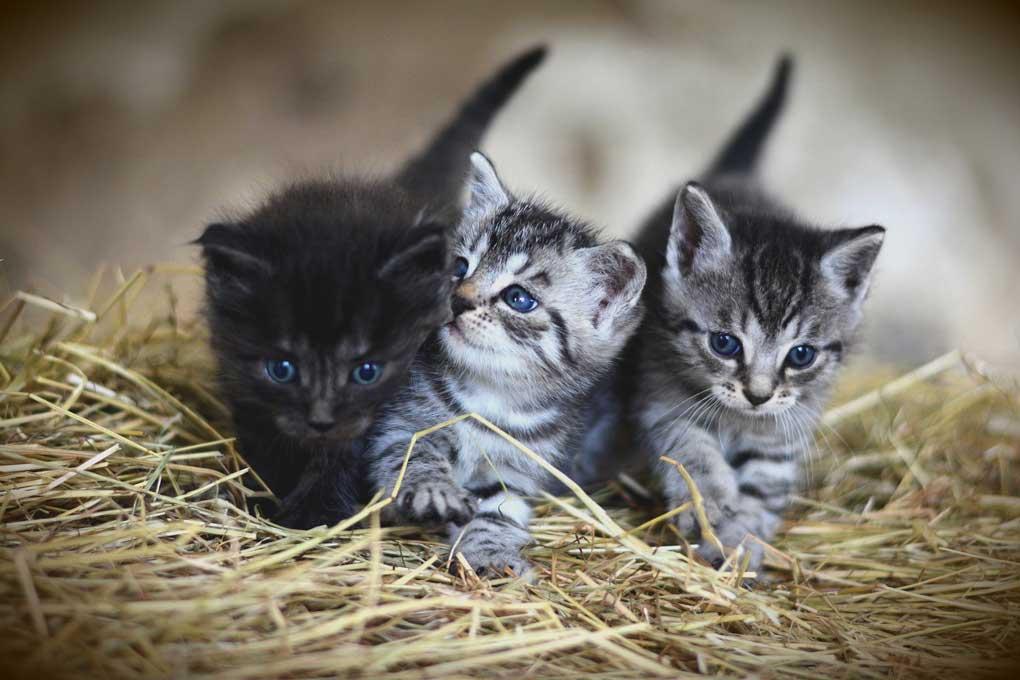 Gatitos bebés en un nido