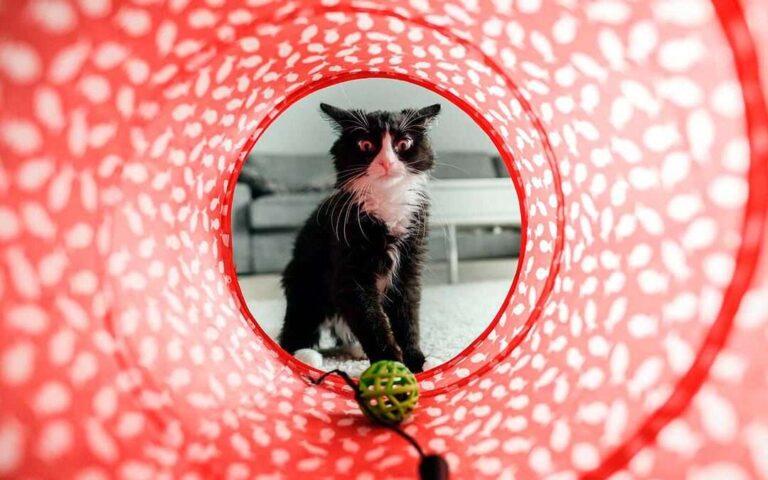 Juegos para cuidar la salud de los gatos