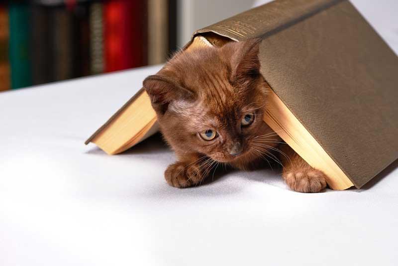 Gatito debajo de un libro
