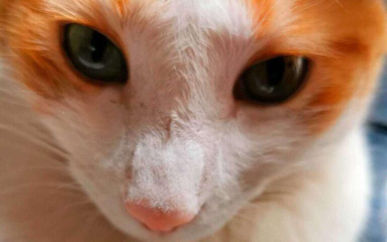 Vida y obra de un gato miau III