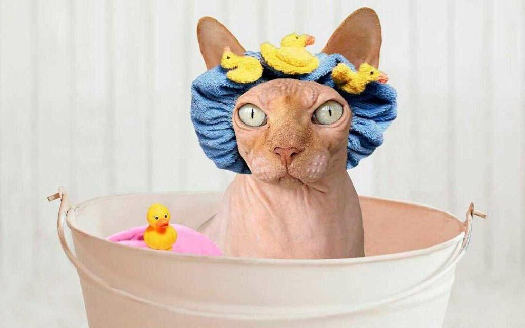 Cómo bañar a un hermoso gato