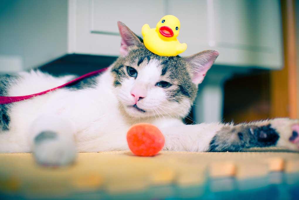 Gato jugando con juguetes de baño