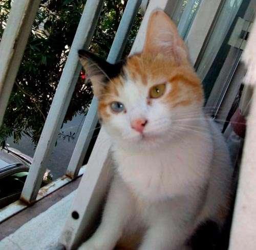 Bowie, el gato