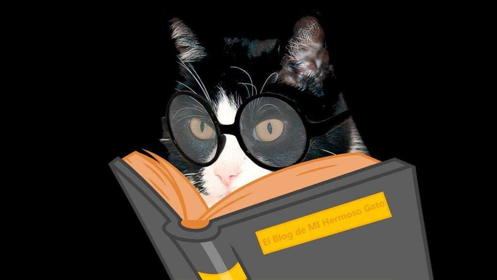 El blog de mi hermoso gato