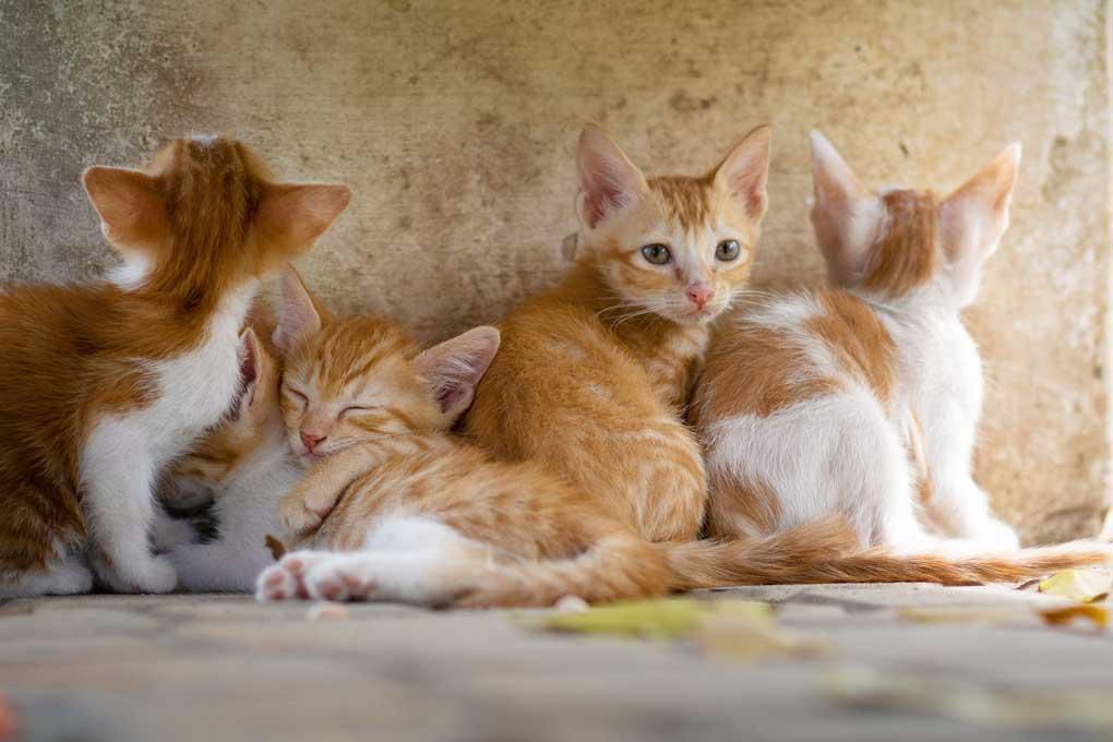 Pequeños gatos