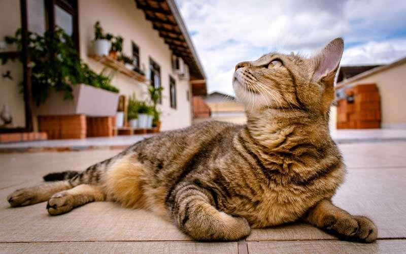 Hermoso gato observando