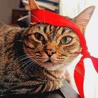 El blog del gato