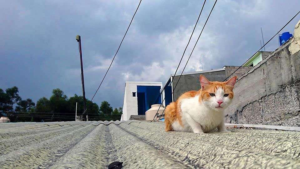 El original hermoso gato