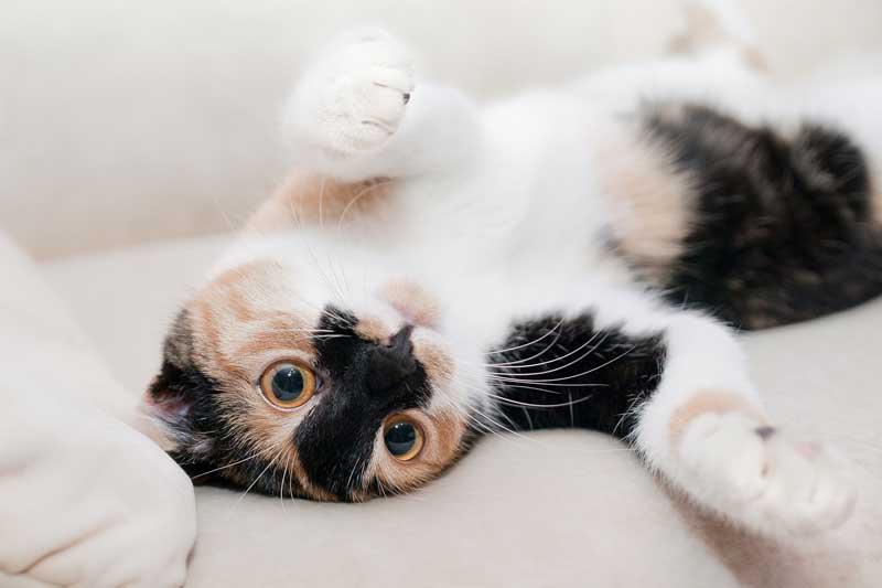 Tierno gatito bebé