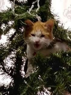 Mi hermoso gato en el árbol de navidad