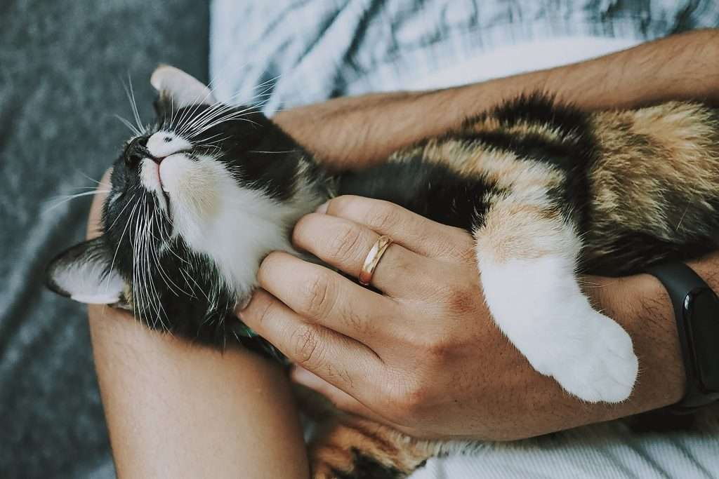 Mujer cuidando a su gato adotado