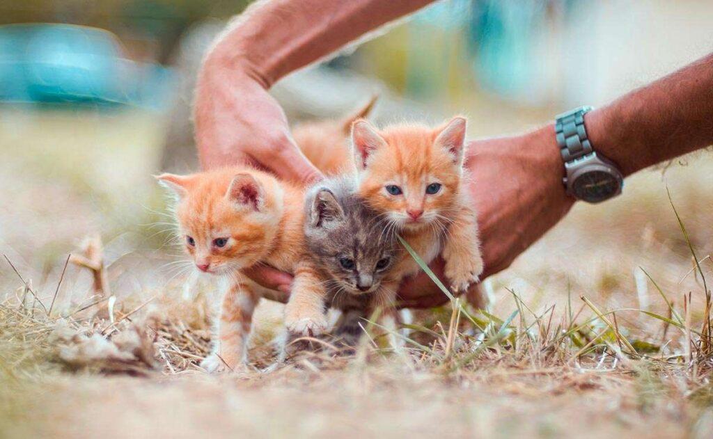Cómo cuidar a un gato y gatito
