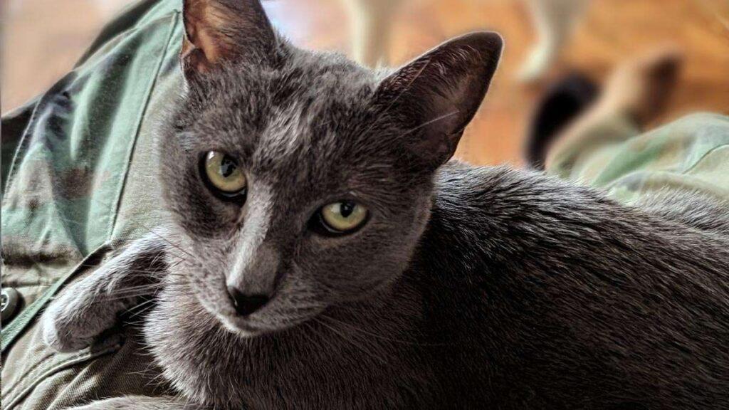Zelda, la hermosa gatita rescatada del abandono