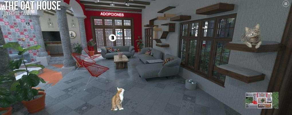 Sala en the house cat by Royal Canin