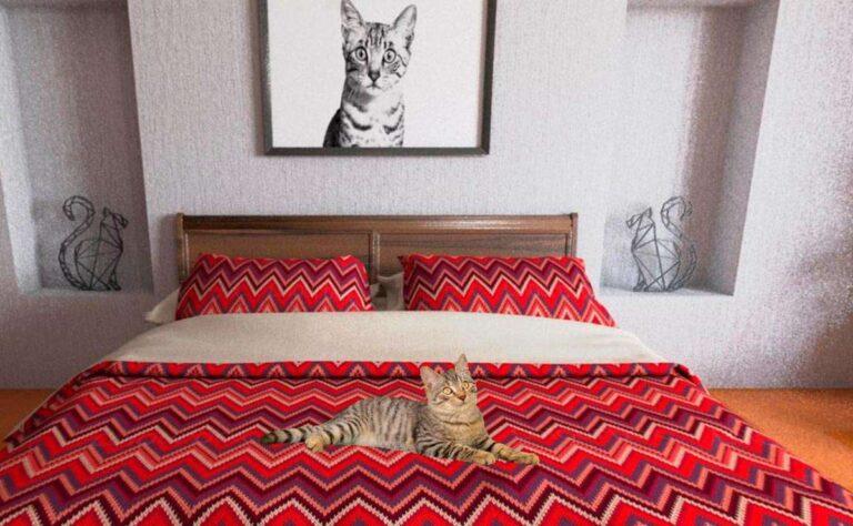 Royal Canin inaugura «The Cat House», espacio VR gratuito para salvar gatos del abandono