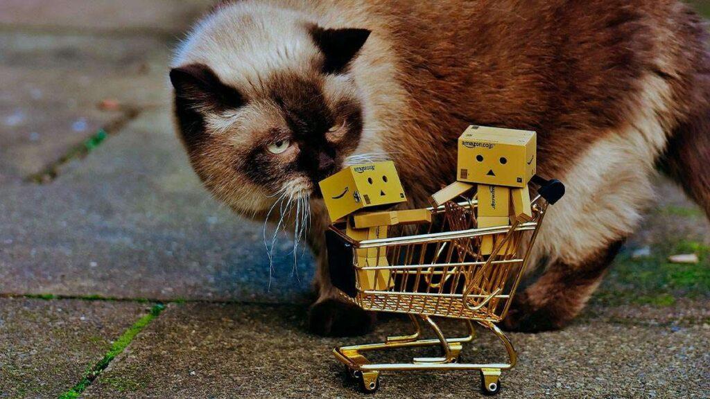 Productos y reseñas del mundo de los gatos