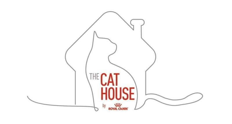 The cat house, dibujo