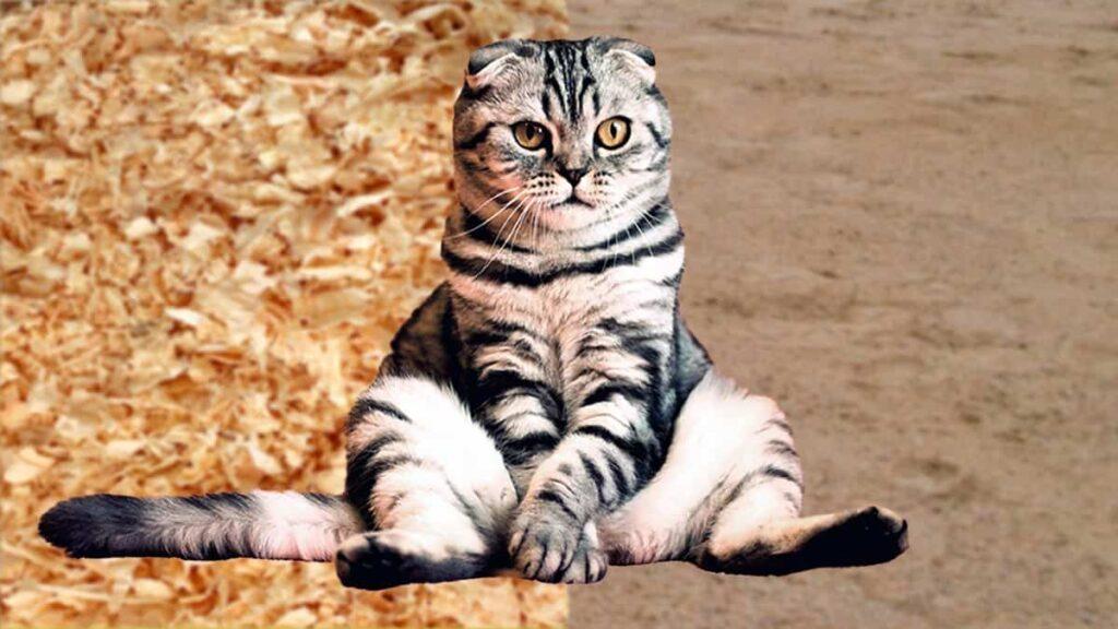 Cómo hacer arena de gatos casera