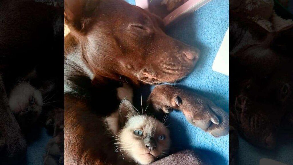 Perro y gato conviviendo (durante una siesta)